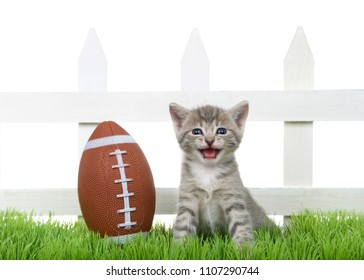 Small tabby baby kitten sitting in green grass back yard next to a white picket fence with a small over sized football, isolated on white.