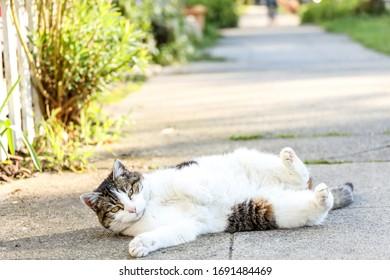 A small Tabby cat lounging on the sidewalk, Seattle Washington.
