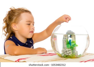 A small tanned girl looks at a colorful fish floating in an aquarium. The concept of flora and fauna, pets. Isolated on white background.