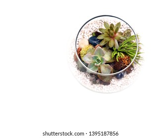 Small terrarium with green plants and white rocks shown from above with empty space