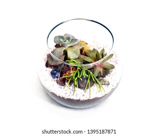 Small terrarium with green plants and white rocks on white background