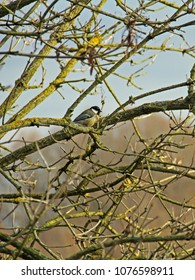 a small tit on branch