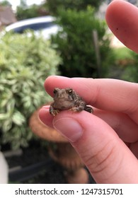 A small toad