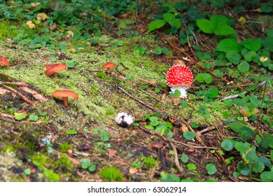 Small toadstool and few brown mushrooms