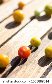 small tomatoes on a wooden table in the midday sun light