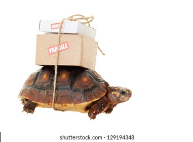 A small tortoise carrying mail on his back.  Shot on white background.  Snail mail slow concept.