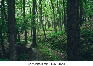 A small Trail meanders through a dense green forest