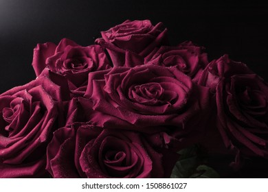 small transparent drops of water on the edge of delicate petals with a dark shadow on a huge bouquet of delicate roses.