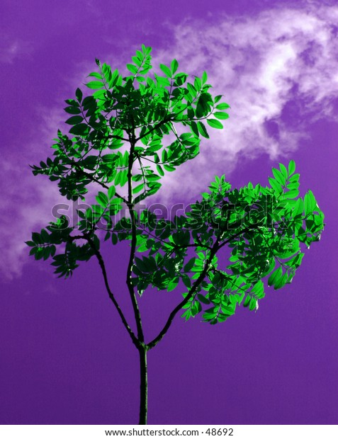 Small tree against sky. Colouring added.
