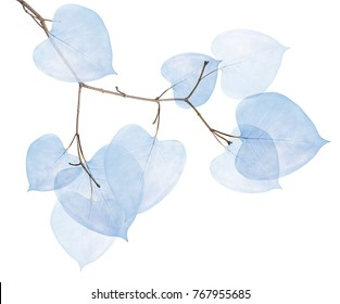small tree branch with dried leaves isolated on white background
