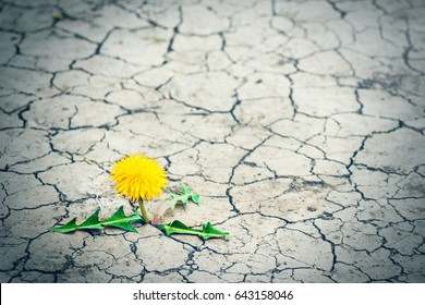Small tree breaks through the pavement. Green sprout of a plant makes the way through a crack asphalt. Concept: don't give up no matter what, nothing is impossible.
