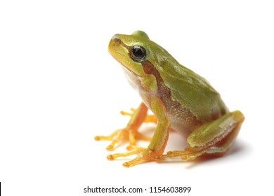 Small tree frog is looking up on white background
