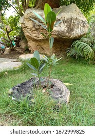 A small tree in the garden