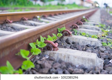 Small tree grow up near the rail way. This rail way quit old.at old train station