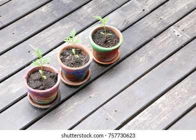 small tree grow in the pot