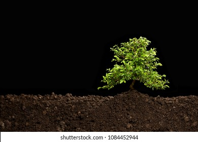 Small tree growing out from soil isolated on black background
