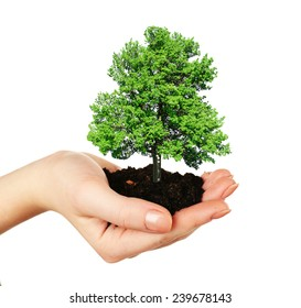 Small tree in hand isolated on white