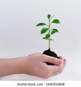 A small tree in the hands of a child. Planting a plant. Conceptual photo on environmental topics. On a light background. There is a place for text.