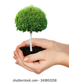 Small tree in hands isolated on white