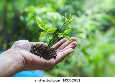 Small tree held in the hand