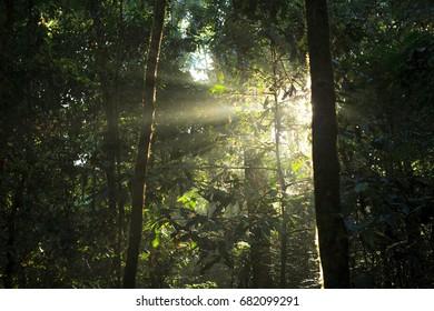 small tree illuminated by sun rays through dense rainforest foliage