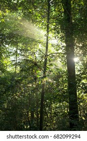 small tree illuminated by sun rays through dense rainforest foliage