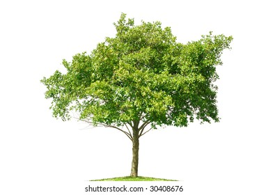 small tree isolated on white background
