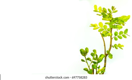 The small tree and leaves on the isolated white background.