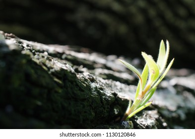 small tree with light on dark background.