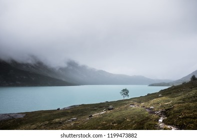 Small tree in a Mountain Lake Landscape.