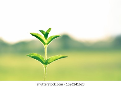 Small tree on natural background