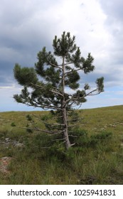 A small tree on top of a mountain