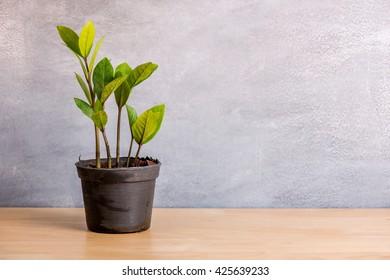 small tree on wood table