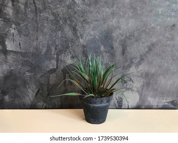 Small tree placed on a wooden table and beside the wall for decoration in a coffee shop.