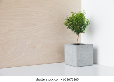 Small a tree in a pot of concrete on a desk in the office