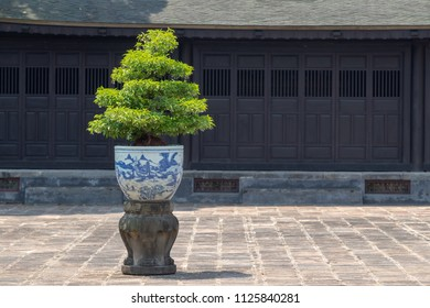 Small tree in a pot in the courtyard of an ancient building in Vietnam