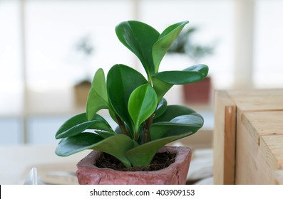 small tree in a pot on the table,Gardening in the office, Love earth ,green World