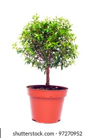 small tree in a pot on a white background