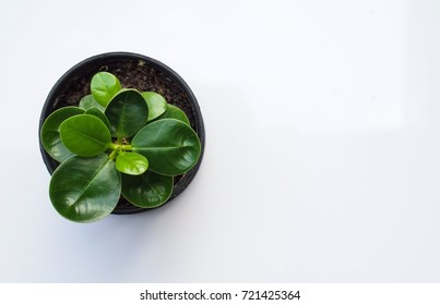 Small tree in a pot, white background,top view.