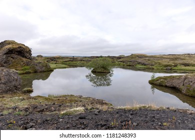Small tree reflected in the water. Myvatn lake in north of Iceland