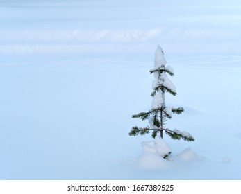 Small Tree in Snow In Finland with Copy Space