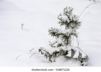 small tree in the snow on a cold day