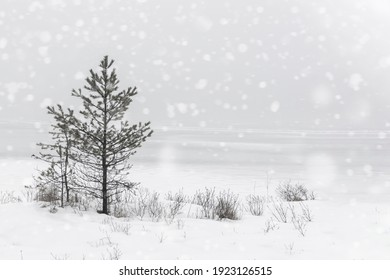 Small tree in a snow-covered park, snow falling, trees silhouette in background, winter landscape, copy space for greeting card, Sognsvann, Norway