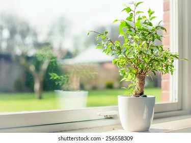 Small tree in a window