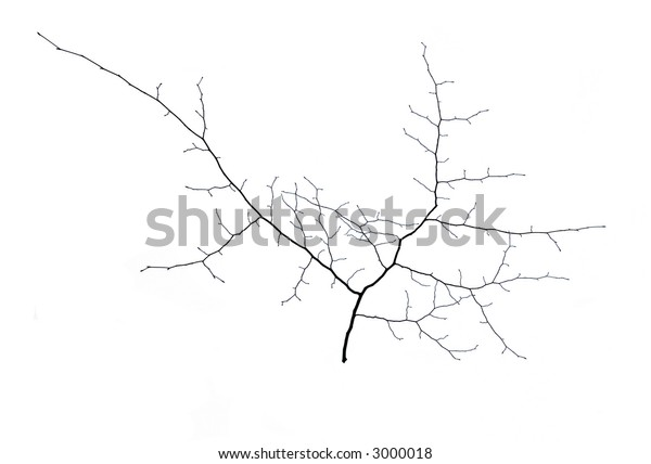 A small tree in winter in deep snow isolated
