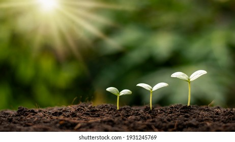 Small trees of different sizes growing on green background concept of caring for the environment and world environment day.