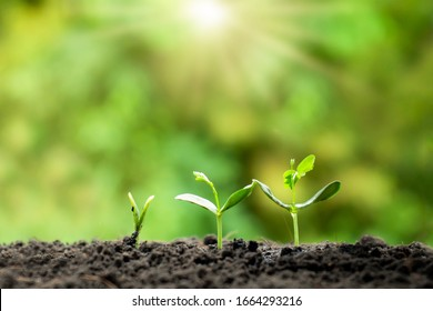 Small trees of different sizes on a green background, the concept of environmental stewardship and World Environment Day.