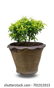 Small trees and flowers in flowerpot for decoration isolated on white background with clipping path.This tree has white flowers.This tree has red flowers.3D illustration.