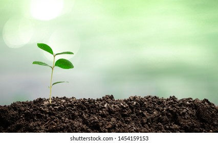 Small trees are growing in the middle of the sun, warm in the morning, the concept of saving the world and reducing global warming.