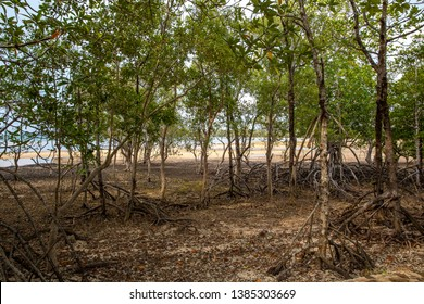 Small trees with roots along beach at Ao Pra beach, Koh Mak island, Trat, Thailand